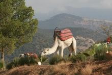 ausflug-bergtal3