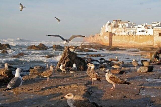 Tagesausflug mit dem Hotel La Maison Nomade nach Essaouira