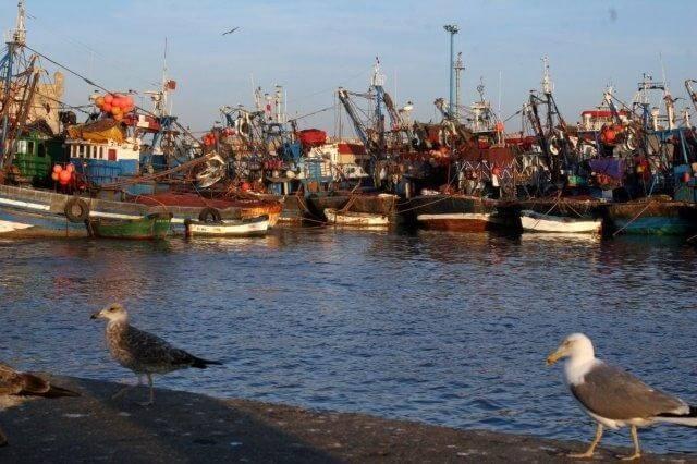 Pittoresker Fischerhafen in Essaouira entdeckt mit La Maison Nomade Reisen