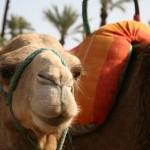 Dromedartrekking mit dem Riad La Maison Nomade