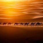 dromedarkarawane-in-der-marokkanischen-wueste