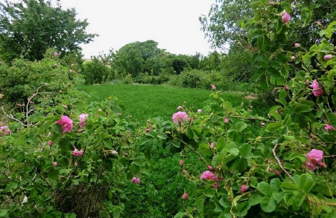 Mit dem Riad La Maison Nomade in das Tal der Rosen