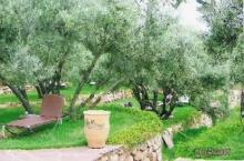 oliveraie_2