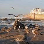 Essaouira, die Stadt am Atlantik, ca. 2 Std. vom Riad La Maison Nomade entfernt
