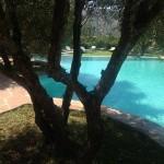 Ein Schwimmbad in den Bergen unter Olivenbäumen