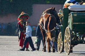 Pferd mit Kutsche