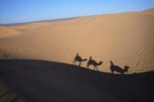 schattenbild kamel