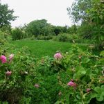 Mit dem Riad La Maison Nomade zum Tal der Rosen