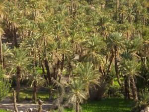 Mit dem Riad La Maison Nomade in den Palmenhain Palmeraie in Marrakesch