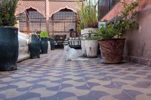 Katze in Marrakesch