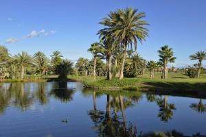 Palmen und See