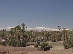 Blick von der Palmeraie in Marrakesch zum Hohen Atlas