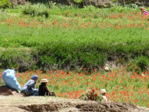 Blumenwiese Marrakesch