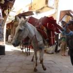 Muli-Transport-Logistic