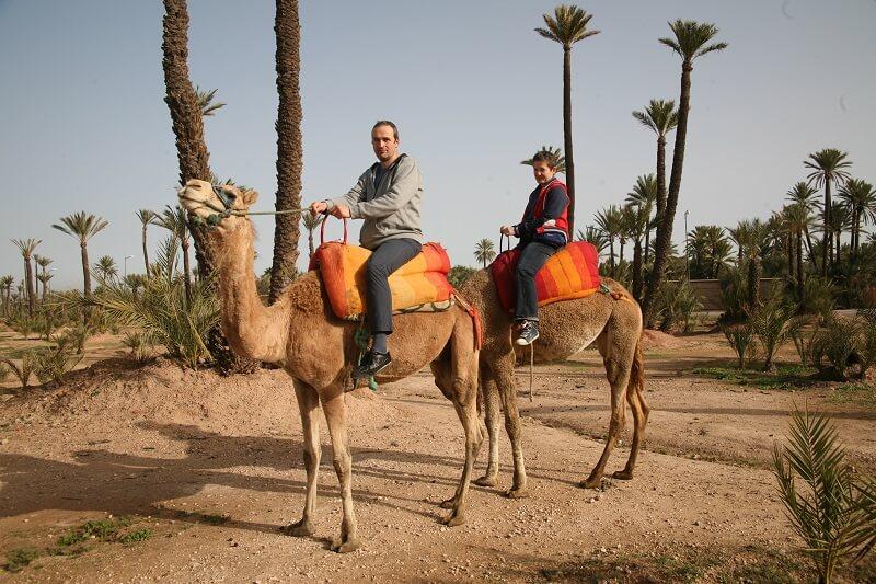 Städtereise Marrakesch/Ausritt mit Dromedaren in der Palmeraie von Marrakesch