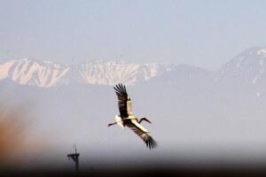 Storch in den Bergen