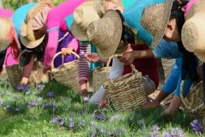 Frauen beim Blumen pfluecken
