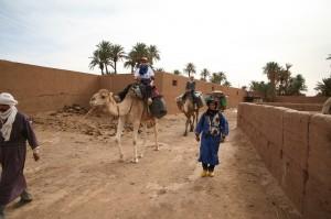 Kamel in der Wueste