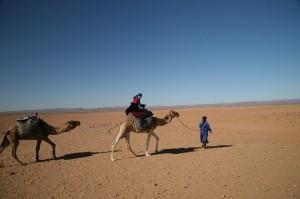 Kamel Wüste Marokko