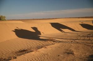 Schatten Kamel in der Wueste