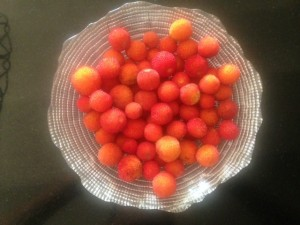 chachnou-eine Baumfrucht aus dem Ourikatal