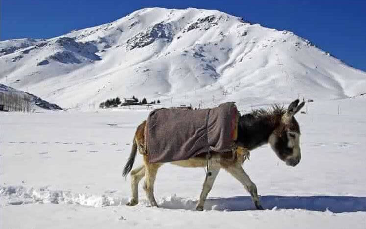 muli-trekking-im-hohen-atlas-mit-dem-riad-la-maison-nomade